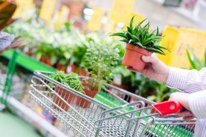 Shop plants online