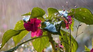 Rainwater-gardening
