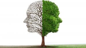 plant-a-neurologist