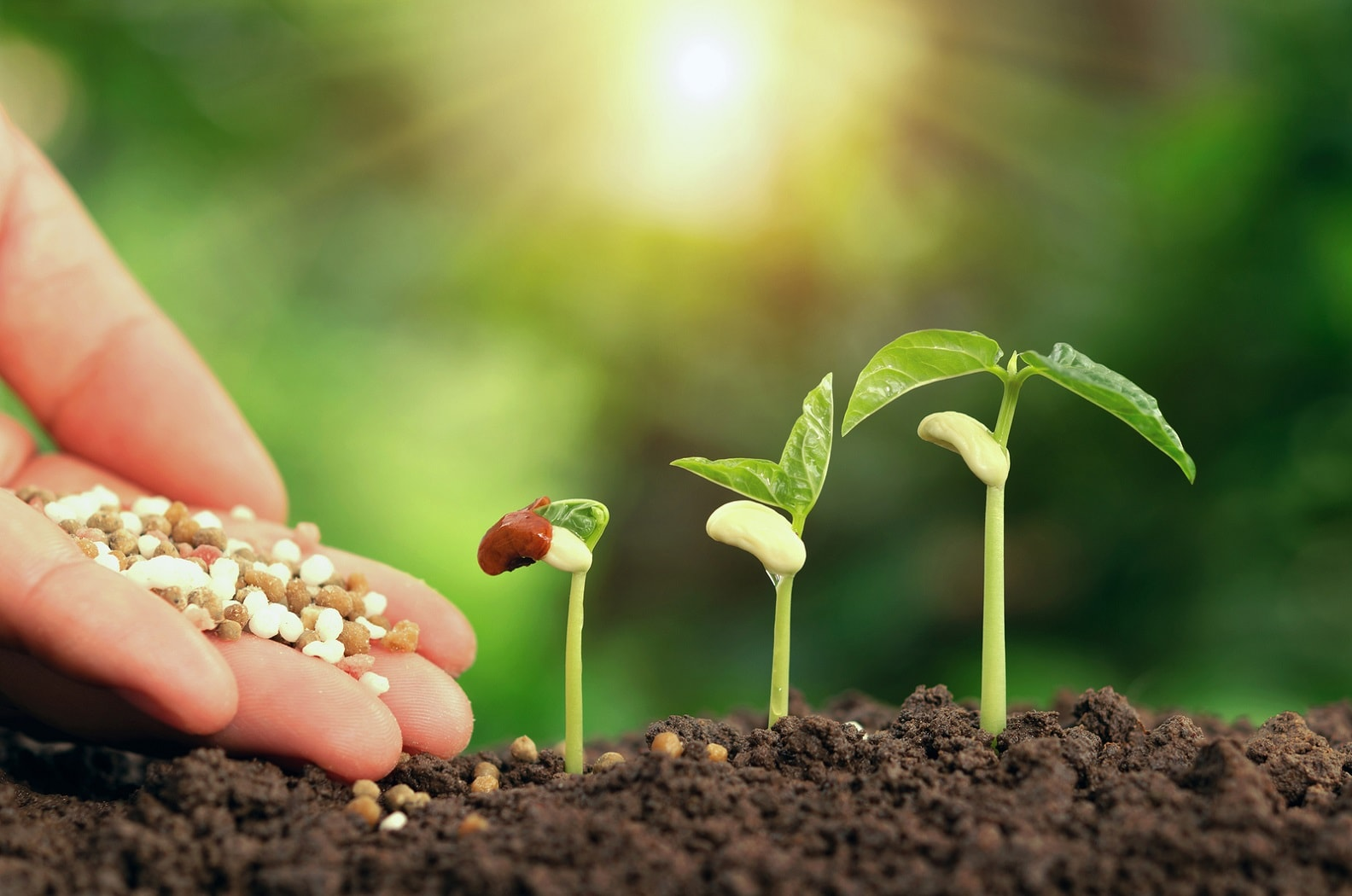 Common mistakes made by beginners using fertilizers