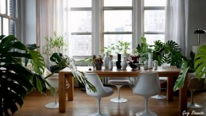 Decorating home with house plants