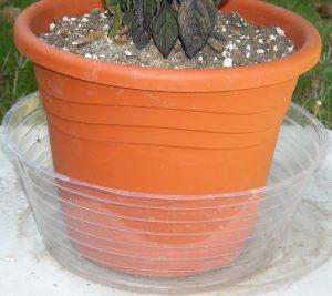 Plant submerged in bath pot