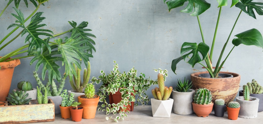 Clay Pots vs Plastic Containers