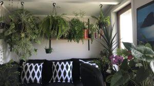 Plants arrangement in living room
