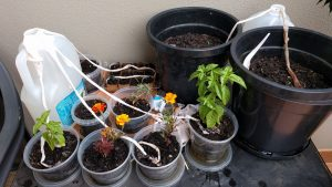 watering inddor plant by cotton string